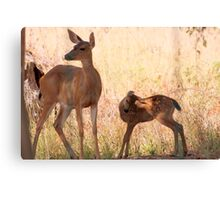 New Born Canvas Print