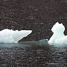 Ice Bear by John Dalkin