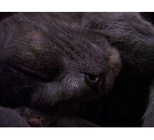 Sweet Feline Dreams... Photographic Print