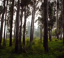 RAIN FOREST by RakeshSyal