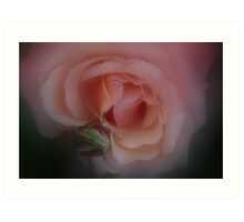 Heart of the Rose Art Print