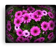 Daisies  in a cluster - Spring 2009 Canvas Print