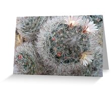 Silky Soft Cactus Flowers Greeting Card