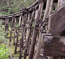Trestle Bridge, Belgrave, Victoria by kathiemt