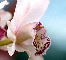 Elegant White Cymbidium Orchid by Renee Hubbard Fine Art Photography