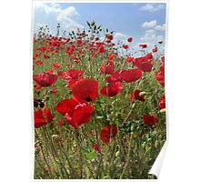 Poppies Will Make You Sleep Poster