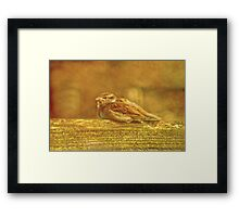 Going Cheep Framed Print