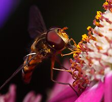 Hoverfly Diner by Andrew Durick