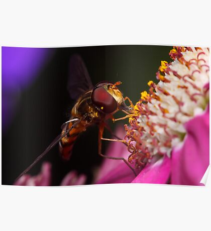 Hoverfly Diner Poster