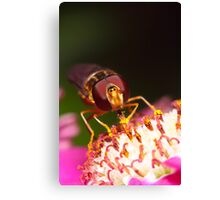 Hoverfly Face Canvas Print