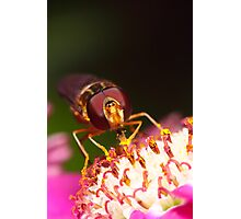 Hoverfly Face Photographic Print