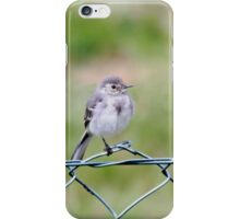Young White Wagtail  iPhone Case/Skin