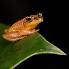 Golden Frog by Brian Avery