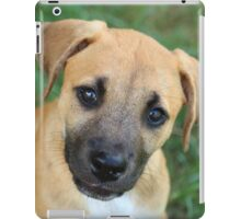 Little Black Mouth Cur iPad Case/Skin