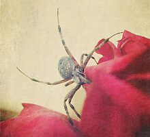 Garden Spider and Red Rose by sunrisern