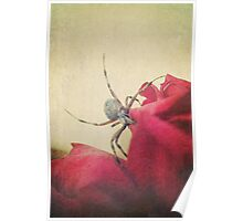 Garden Spider and Red Rose Poster