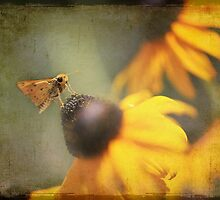 Skipper Butterfly on Black Eyed Susan Flower by sunrisern