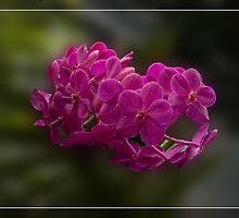 Floating flowers by foppe47