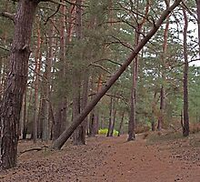 The track - Walking into Frensham woods - 3/8 by pathseeker