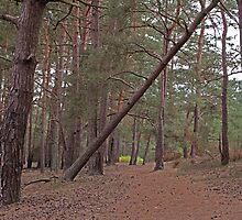 The track - Walking into Frensham woods - 3/8 by pathseeker