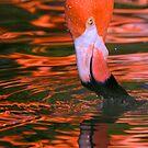 Pink Flamingo by Randall Ingalls