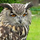 Eagle Owl by Kirsty Auld