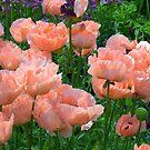 "Pink oriental poppies in an ""Oil Painting"" style by Debu55y"