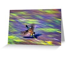 A Common Moorhen in flight Greeting Card