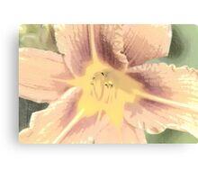 Orange Asiatic Lily Sketch1 Canvas Print
