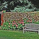 Garden in France by DiamondCactus