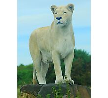 The Queen of West Midlands Safari Park Photographic Print