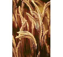 Wild Harvest Photographic Print