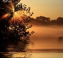 On golden pond by Angela King-Jones