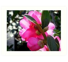 """The """"Other Side"""" of Camellia Art Print"""