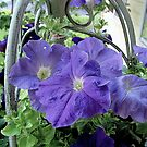 Petunias in a Basket by Rusty Katchmer