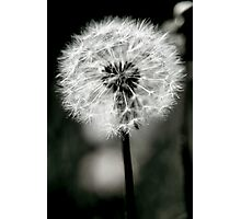 A Dark Heart - Gothic Dandelion Photographic Print