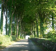 The Beech Tree Road,Georgestown,Co.Waterford,Ireland. by Pat Duggan