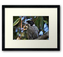 Grey Butcher Bird Framed Print