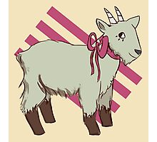 goat bow Photographic Print