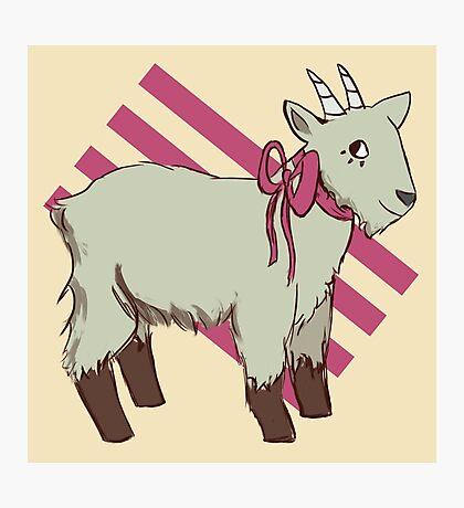 goat bow Photographic Print