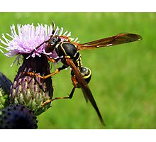 H is for Hornet Photographic Print