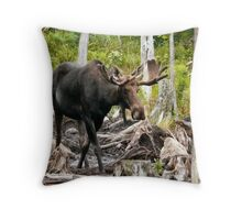 Bull Moose In Velvet Throw Pillow