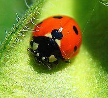 Mrs. Lady Bug by MrJohnny68