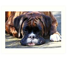 Such is Life -Boxer Dogs Series- Art Print