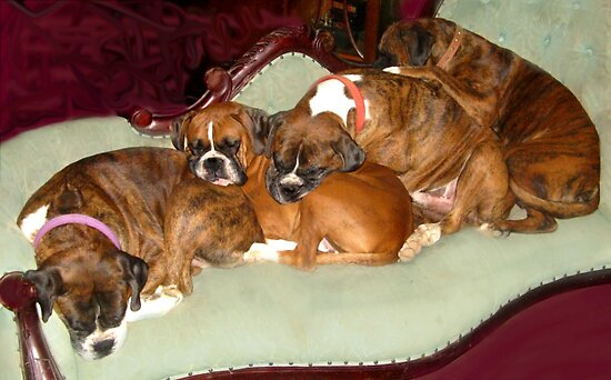 Pile up on the chaise lounge by MelDavies