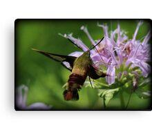 Hummingbird Moth Summer Canvas Print