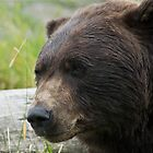 Alaskan Brown Bear by Cheryl  Lunde