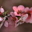 Pink with a Golden Touch by Joy Watson