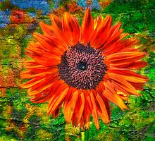 Wild Sunflower by Steve Lents