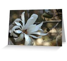 Beauty Is In The Details Greeting Card